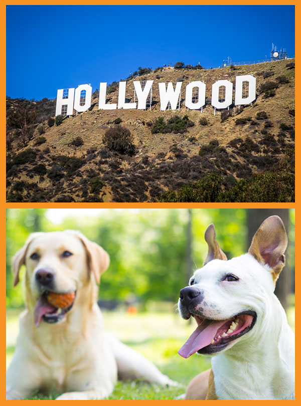 Hollywood Mobile Dog Grooming
