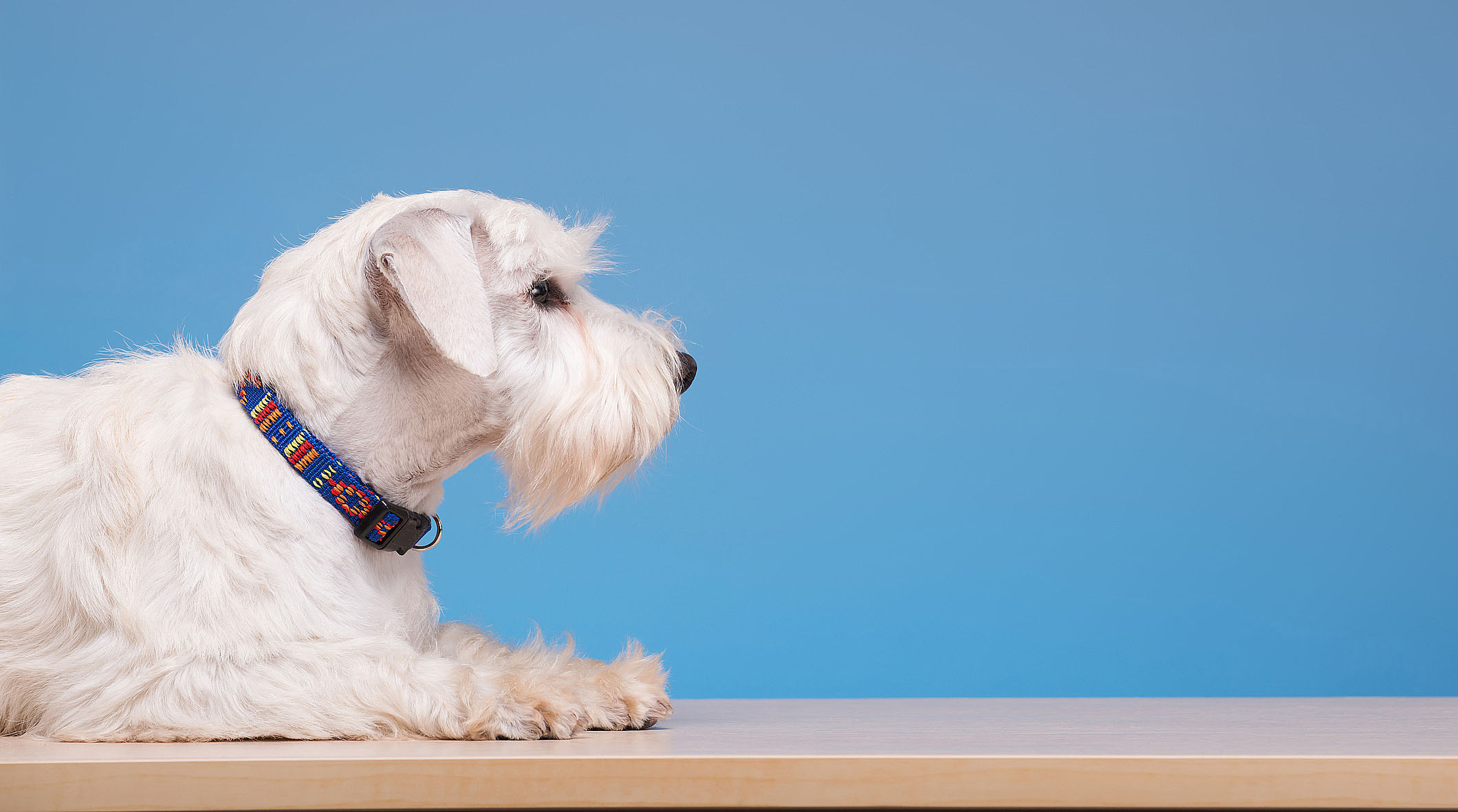 mobile-dog-grooming-beverly-hills